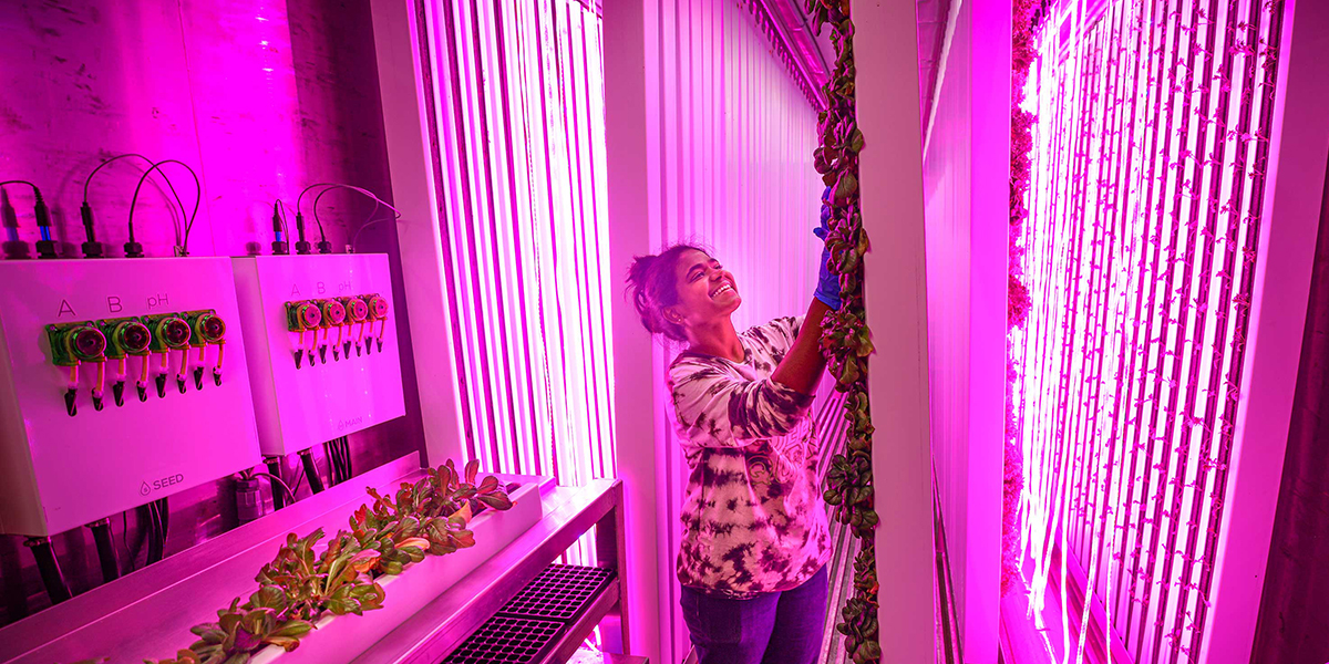 Image for RS34543_20200817-CFF-hydroponic-container-003.