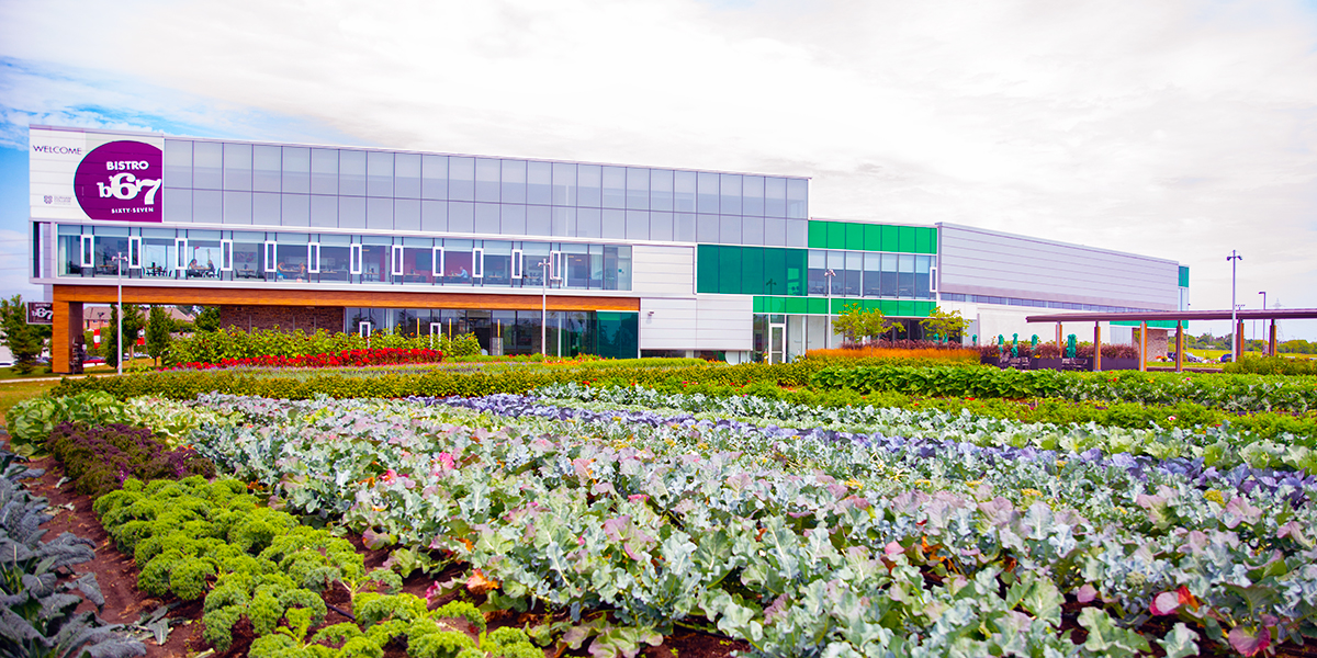 Panoramic view of the Centre For Food building at Whitby Campus